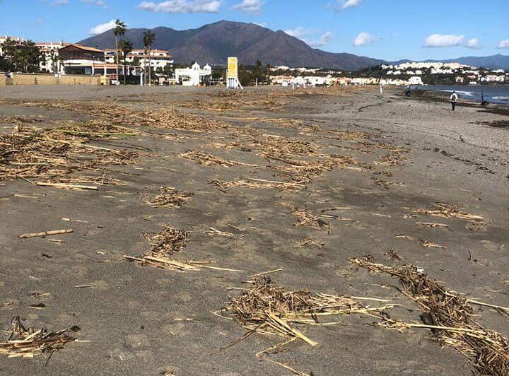 cañas en la playa